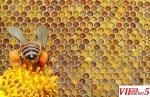 PERGA pcelin leb AMBROZIA Bee bread - D A B E S K I