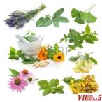 LEKOVITI BILKI,KREMI,MASTI I MELEMI -Natural Pharmacy DABESKI