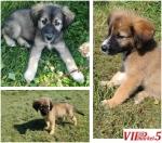 Се подаруваат 2 женски и 1 машко куче !!!