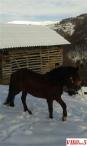 Prodazba na konj