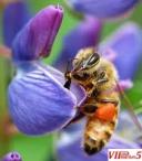 Пчелари, евидентирани или ергистрирани и земјоделски стопанства